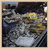 Ostrov Vis - rybí trh